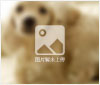 哈尔滨市爱猫狗宠物医院