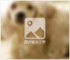 诚心赠送给爱心人可爱的泰迪狗狗