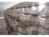 黑龙江种鸽 优惠出售多个品种
