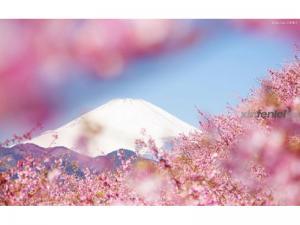 国际旅行社-日本赏樱七日游
